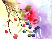 Hips, Haws and Sloes