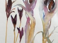 Iris Seed Heads