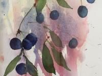 Sloes in the Hegerow