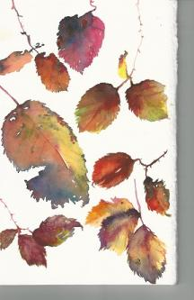 Brightly coloured bramble leaves in Autumn