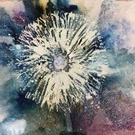 White dandelion clock amidst blue and mauves
