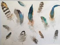 Assorted colourful feathers scattered together