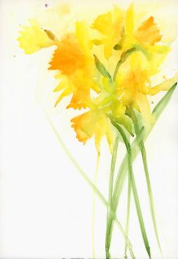 Bright daffodils on right side against white background