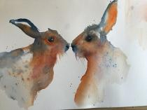 Two brown hares looking at each other against a white background