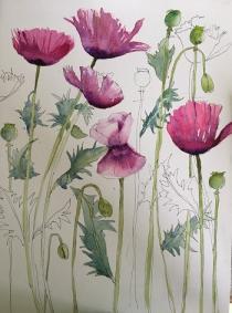 Oriental Poppies 2
