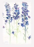 Blue Delphiniums Card