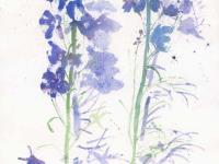 Delphiniums And Shadow
