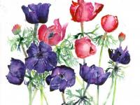 Spring_Jewels