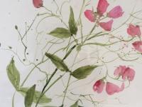 Sweetpeas Growing Wild