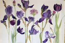Dark purple irises, pink alliums and black tulips