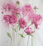 Pink peonies swaying together in the border